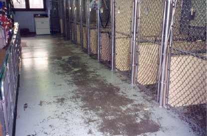 https://www.vseal.com/media/catalog/product/cache/1/image/9df78eab33525d08d6e5fb8d27136e95/k/e/kennel_concrete_epoxy_before.jpg